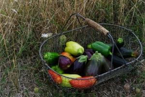 vegetables-2726801_1920.jpg