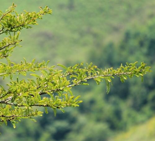 tree-3284592_1920.jpg