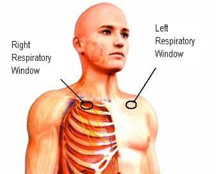 - Figure 1 - Locations of the left and right respiratory windows. (1) Locate the clavicle bones on the left and right sides.(2) find the natural indentations adjacent to the left and right shoulders.