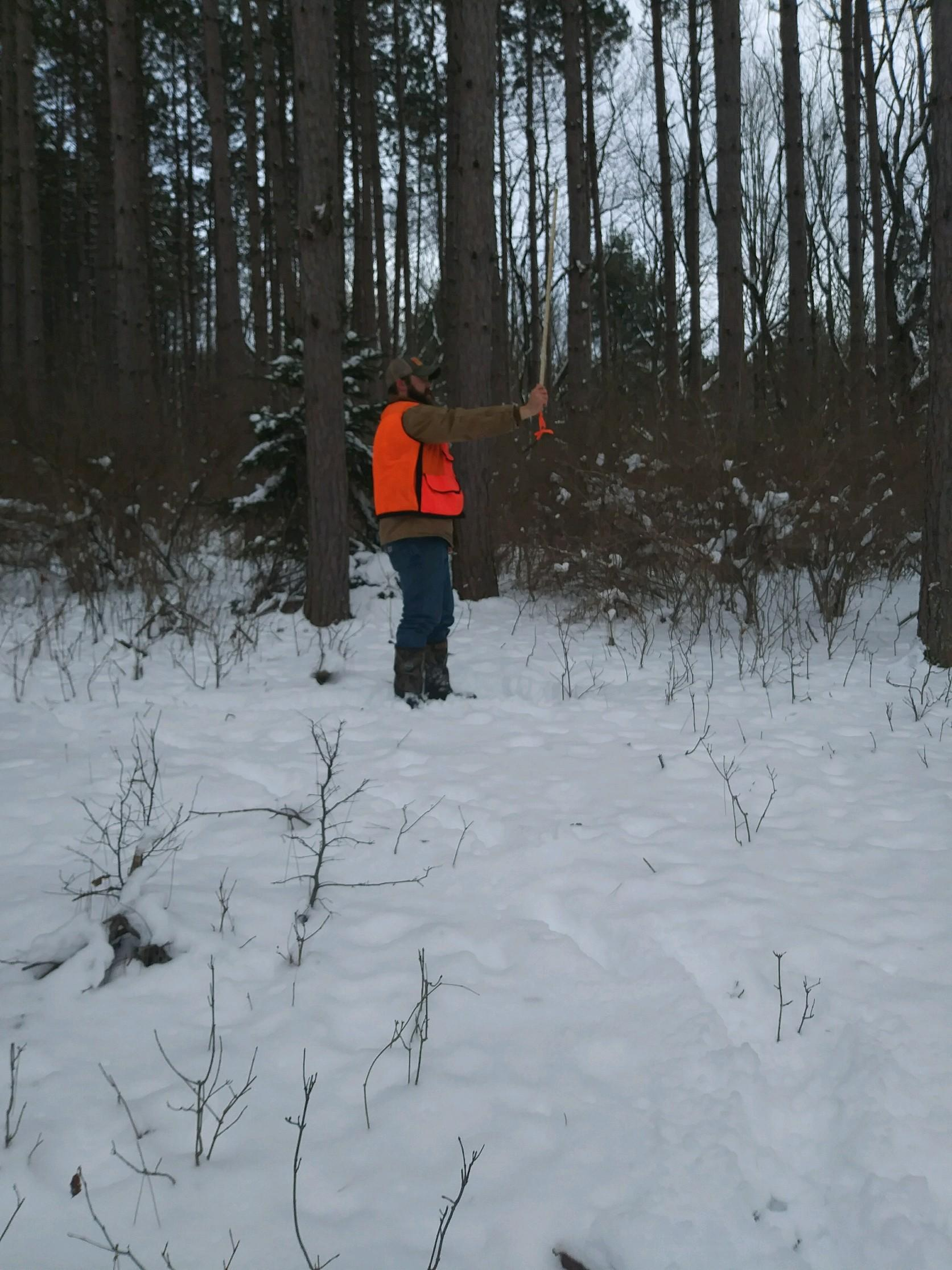 Completing Forest Inventory
