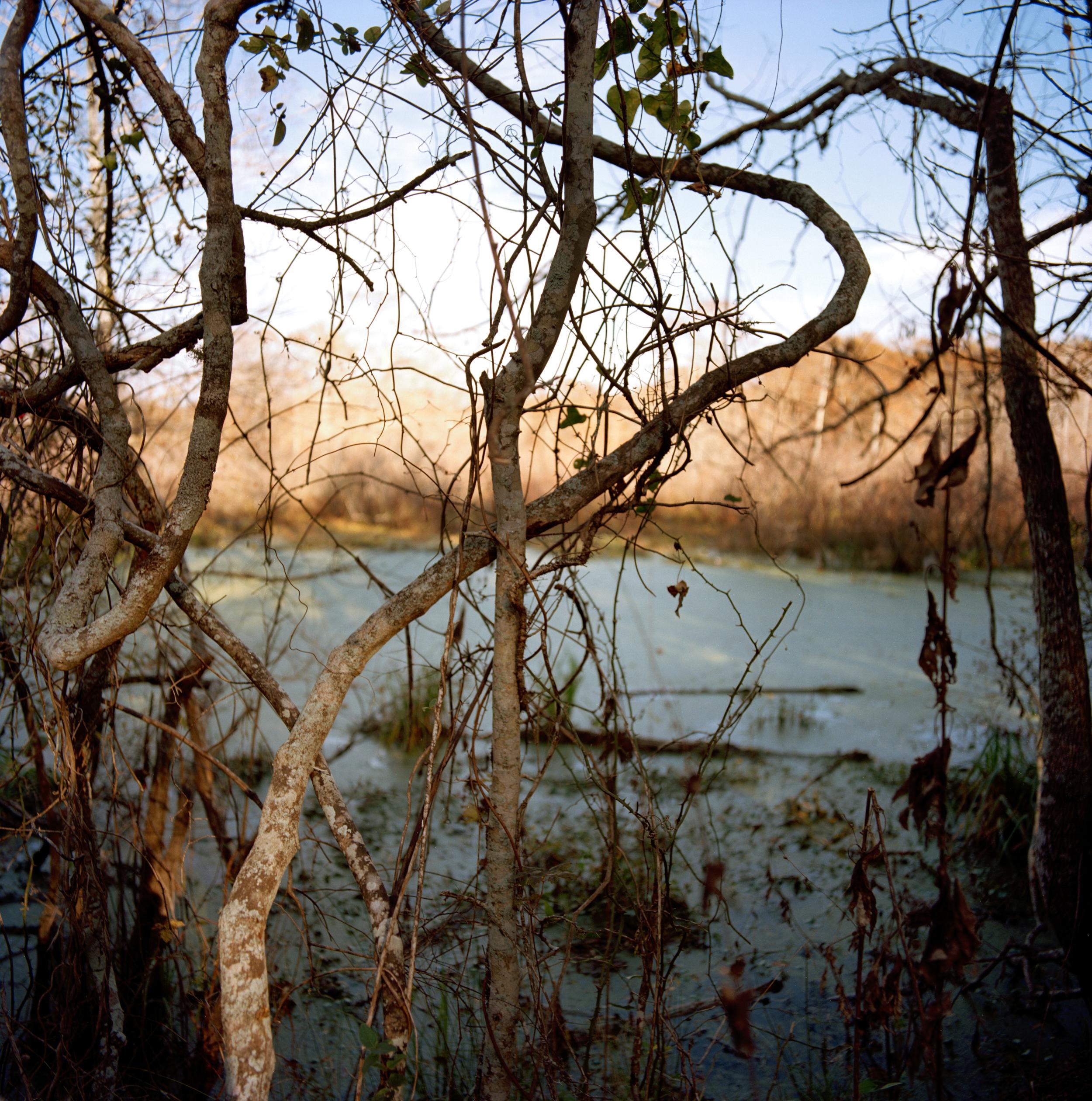15-lake_martin_6.jpg