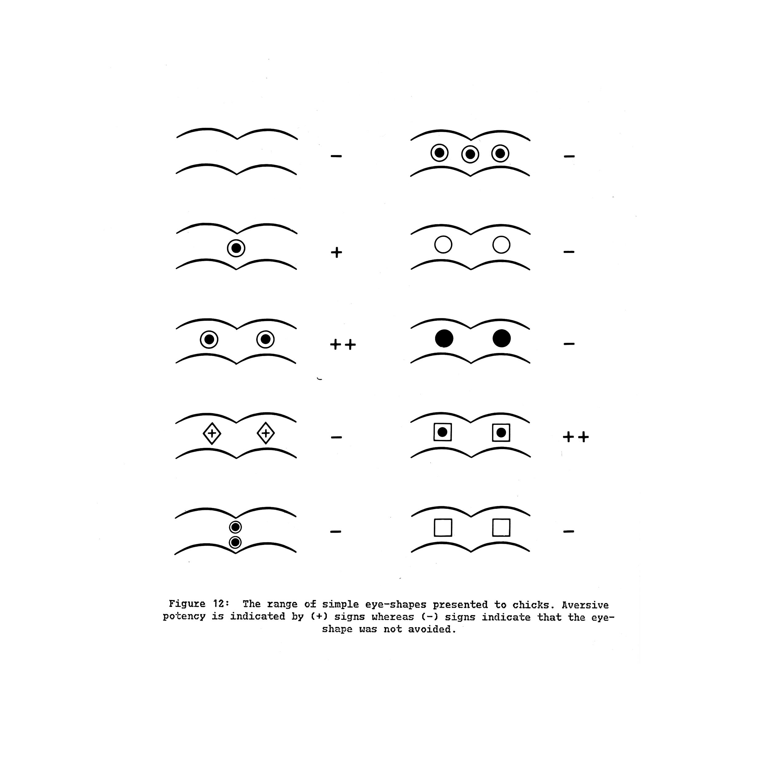 11-eyes.jpg