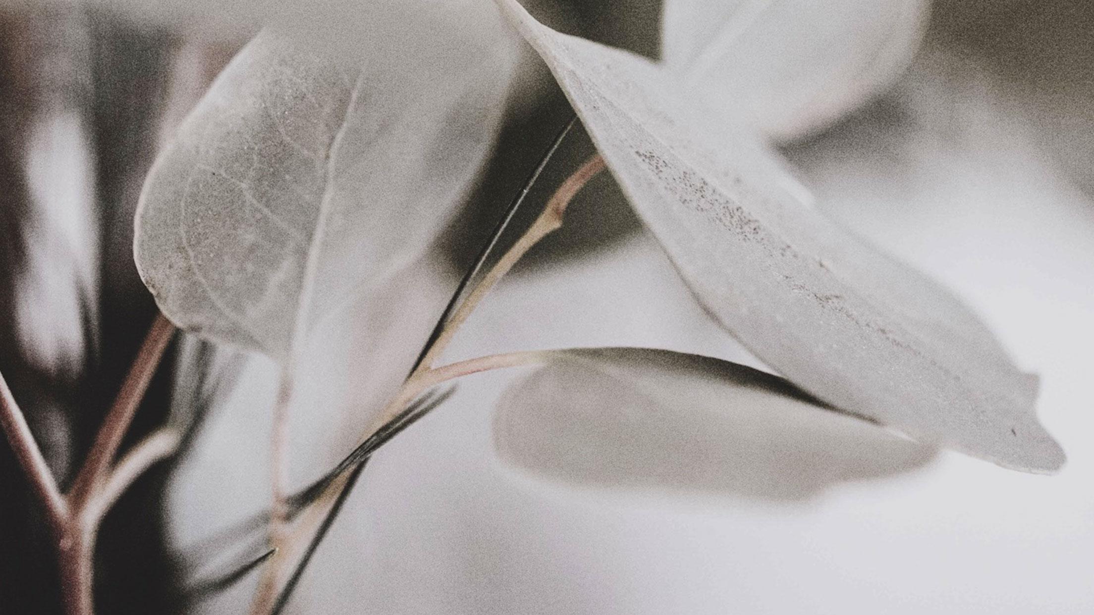 wm-eukalyptus-start.jpg