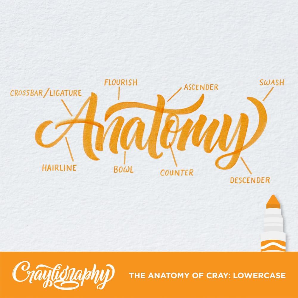 crayligraphy_anatamony.jpg