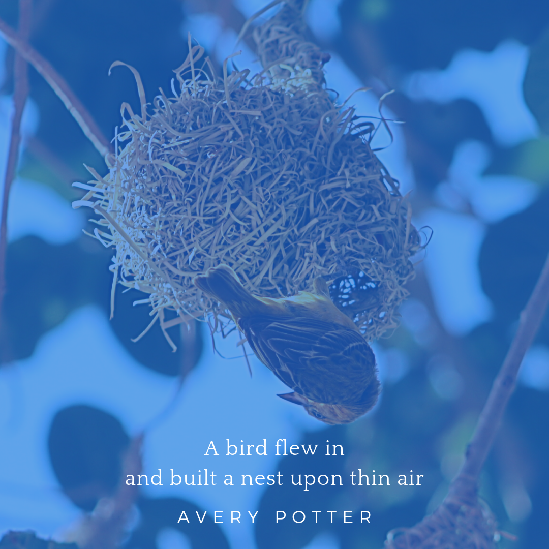 avery potter.png