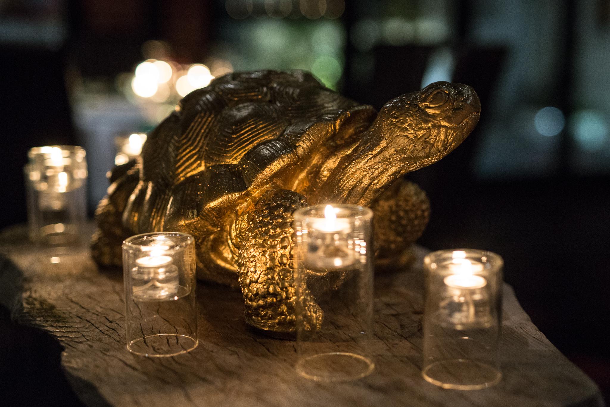 Tortoise.12.2.18_WR-6464.jpg