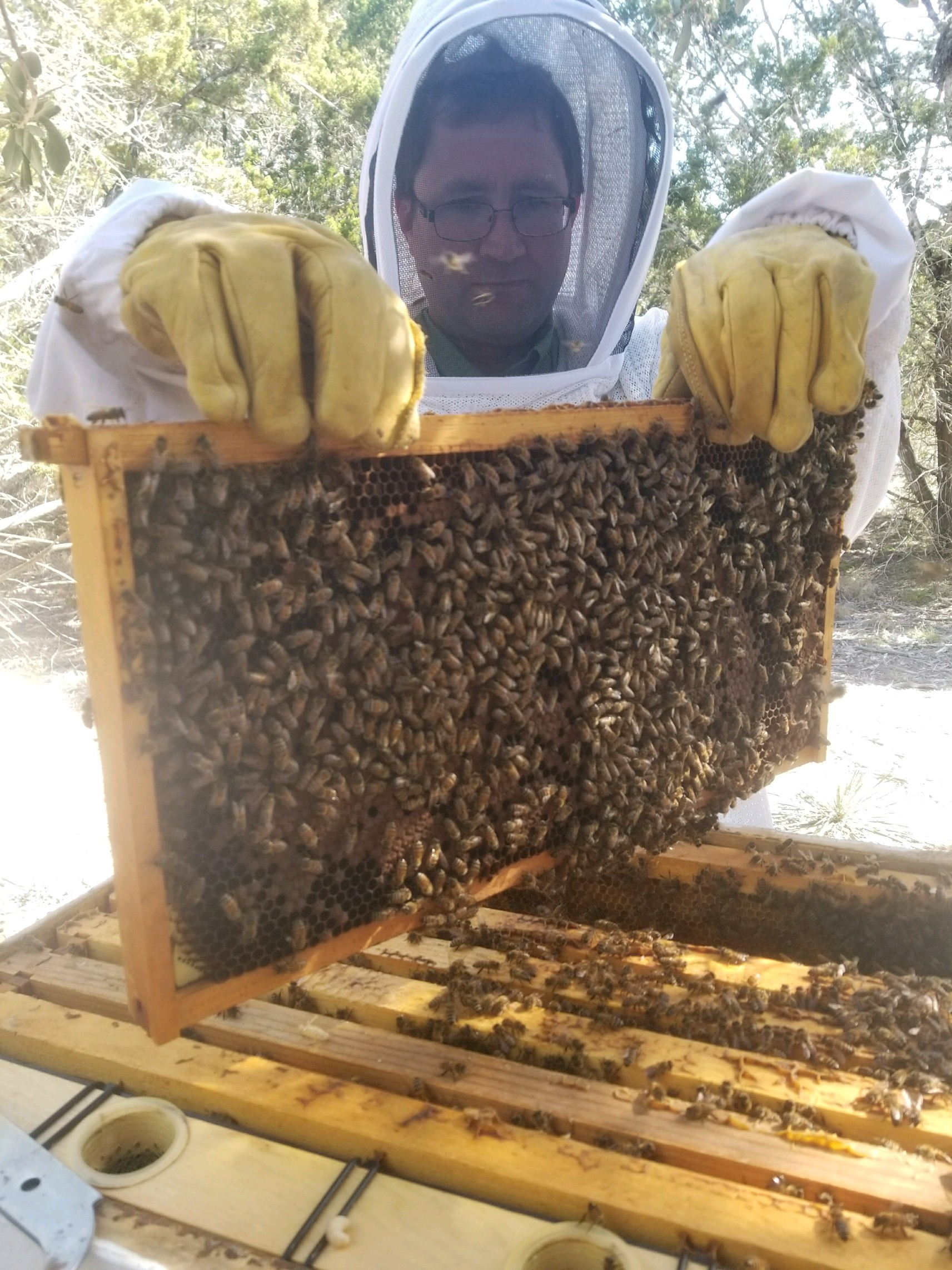 Student Hal holding a nice frame of bees!