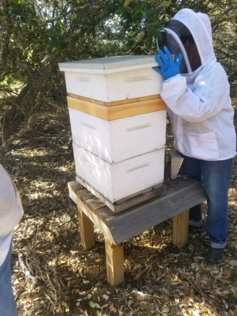 Linda starting a hive inspection