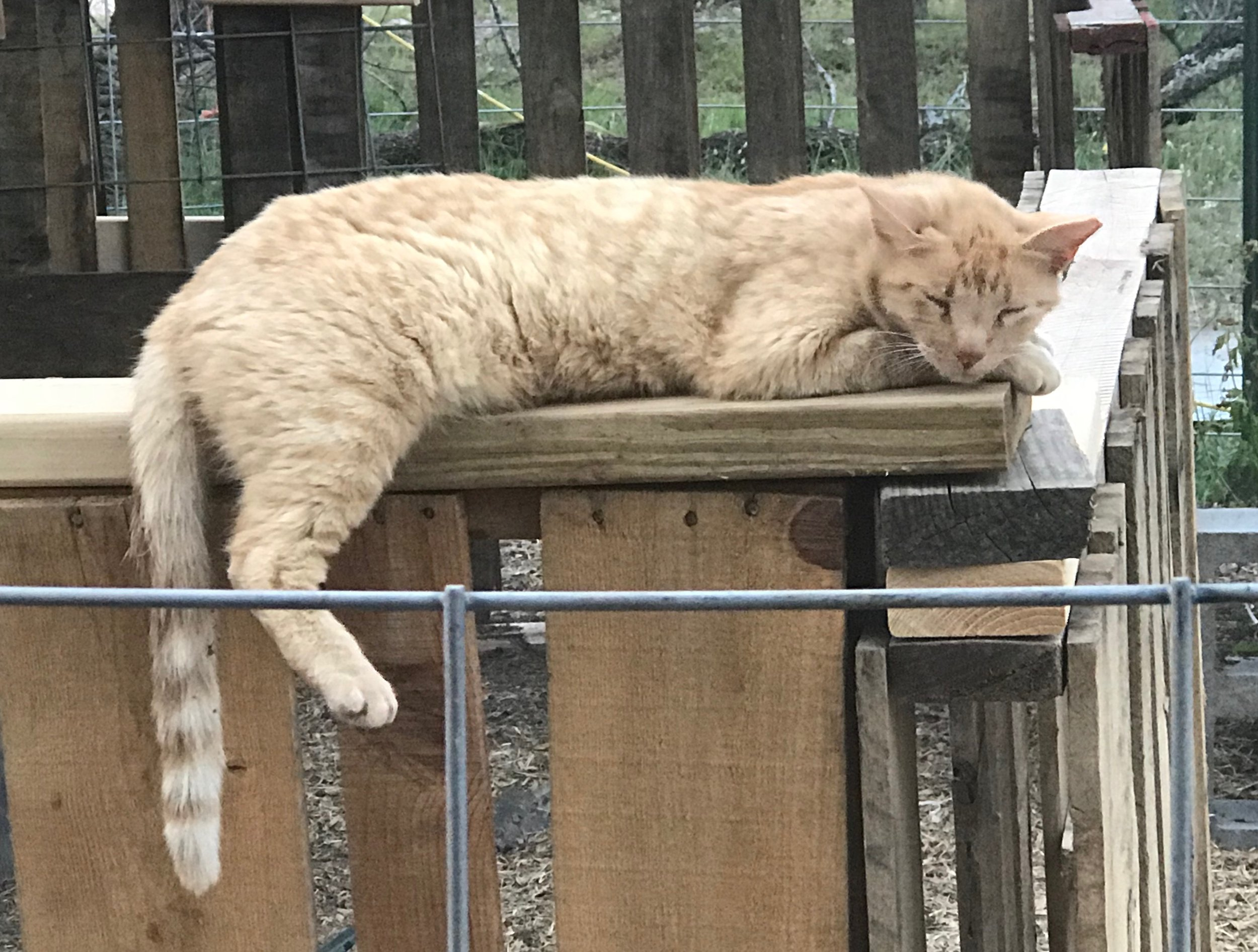 Napping on the Job? - Well Texas does get hot so when it's over 100 degrees in May - the cats just take naps!