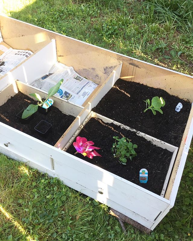 🌿First time gardening! 🙋‍♀️We bought our house almost 5 years ago and I was 38 weeks pregnant with my oldest, when we moved in! We had high hopes for what we would do with our yard but ya know, being pregnant, breastfeeding or having small children prevented that from becoming reality! 🌿This year we did it!! Repurposed this old twin bed frame into a nice garden bed. We have carrots, lettuce, zucchini, snap peas, strawberries and artichoke! 🌿Any gardening tips??