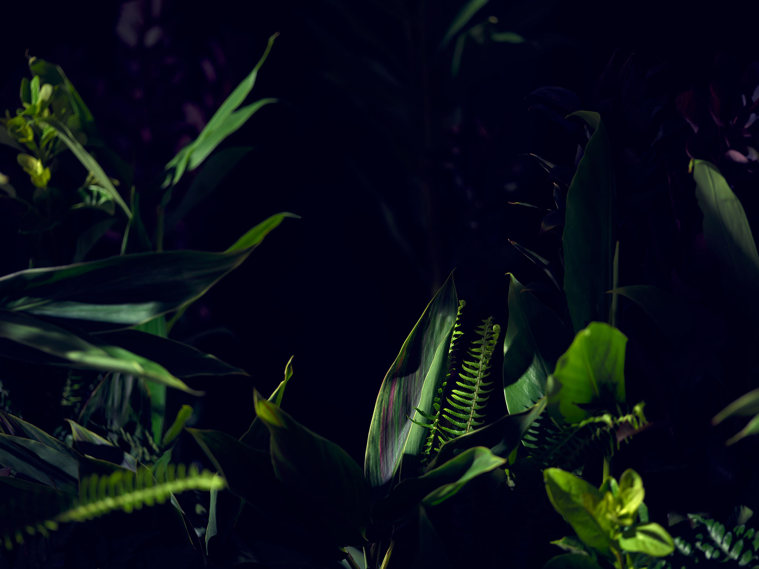 Botanical Shoot
