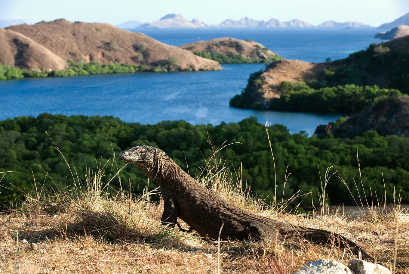Komodo Island, welcome to Jurassic Park - From 30 minutes to 3 hours, Komodo Island has 3 different main treks, accessible to everyone. You will see Dragons after about 10 minutes walking, no needs to go deeper into the jungle! But if you are a well-prepared trekker, there are longer treks which may take 8 hours and lead to breathtaking views over the bay and the rest of the National Park. A local ranger will guide you over the island.
