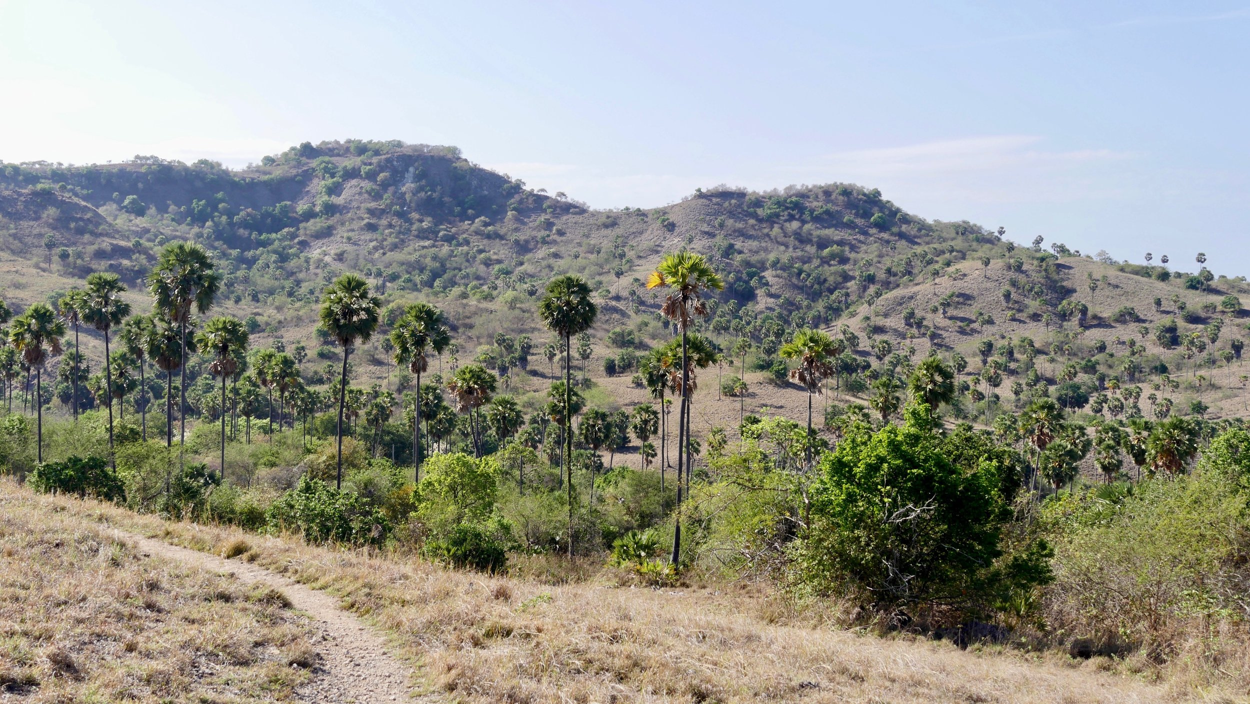 Rinca Island -