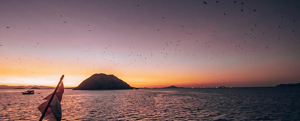 kalong island bats.jpg