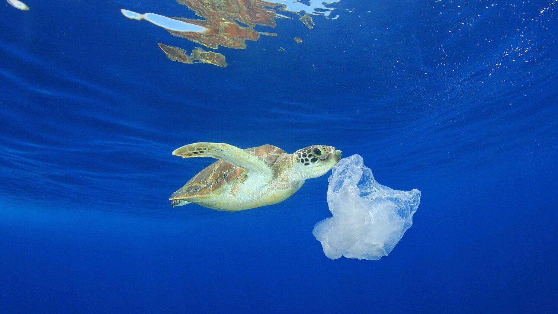 turtle-eating-plastic.jpg