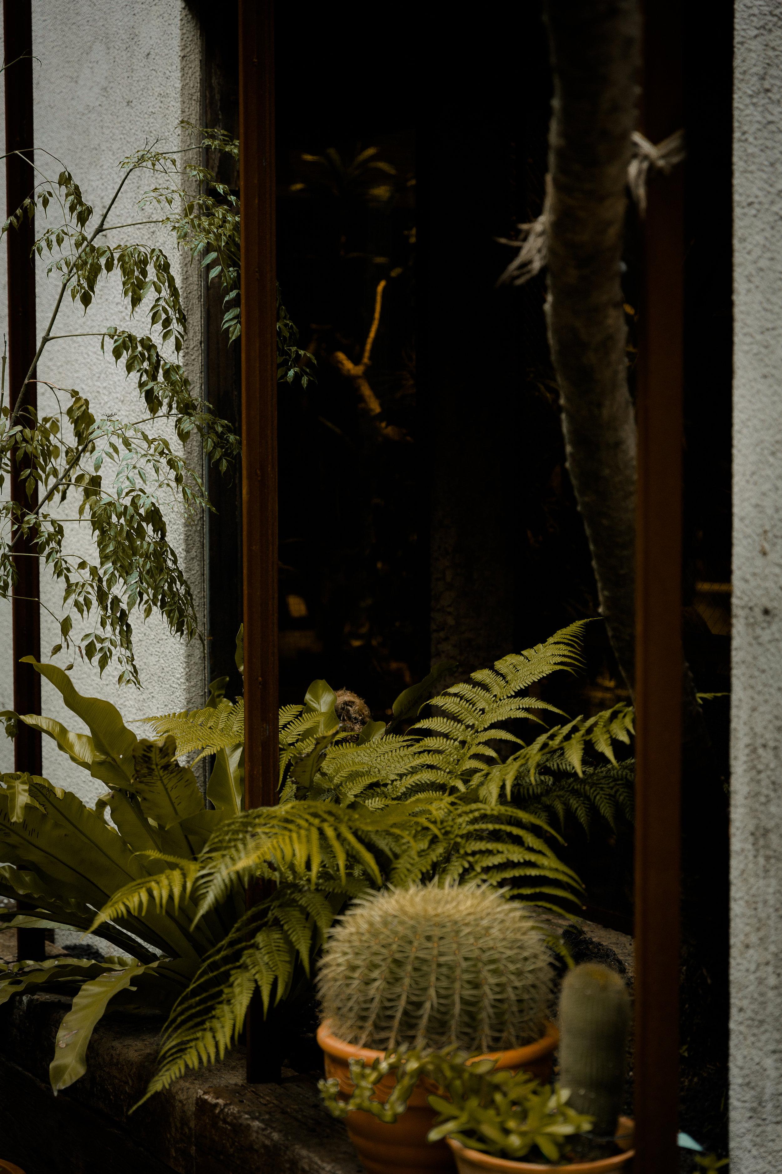 Cacti in window. Tokyo, Japan