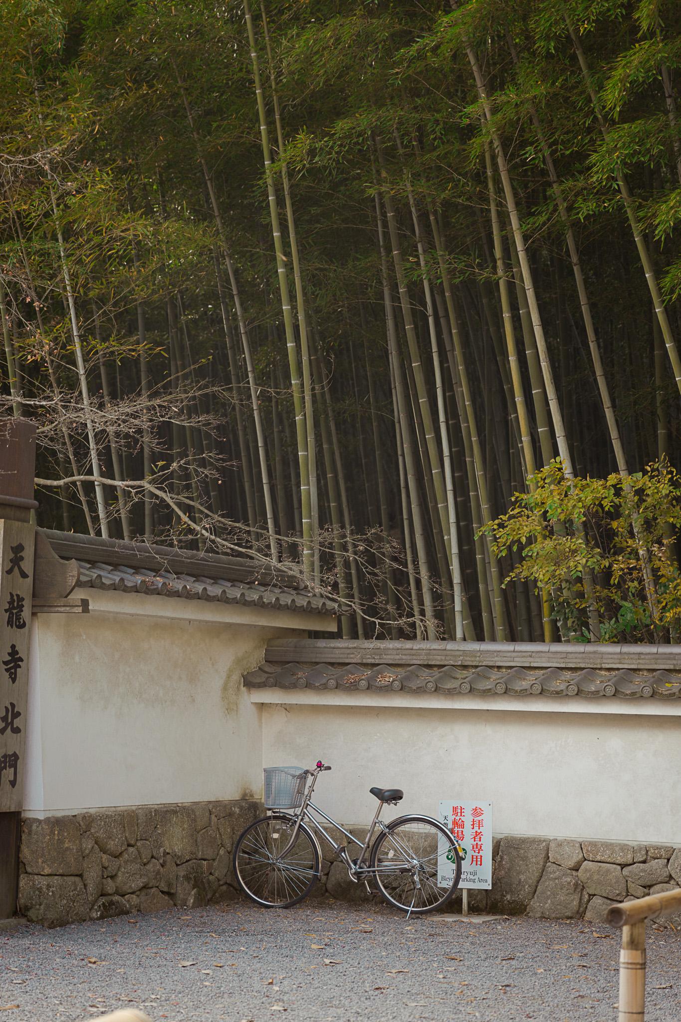 bamboo-forest-arashiyama