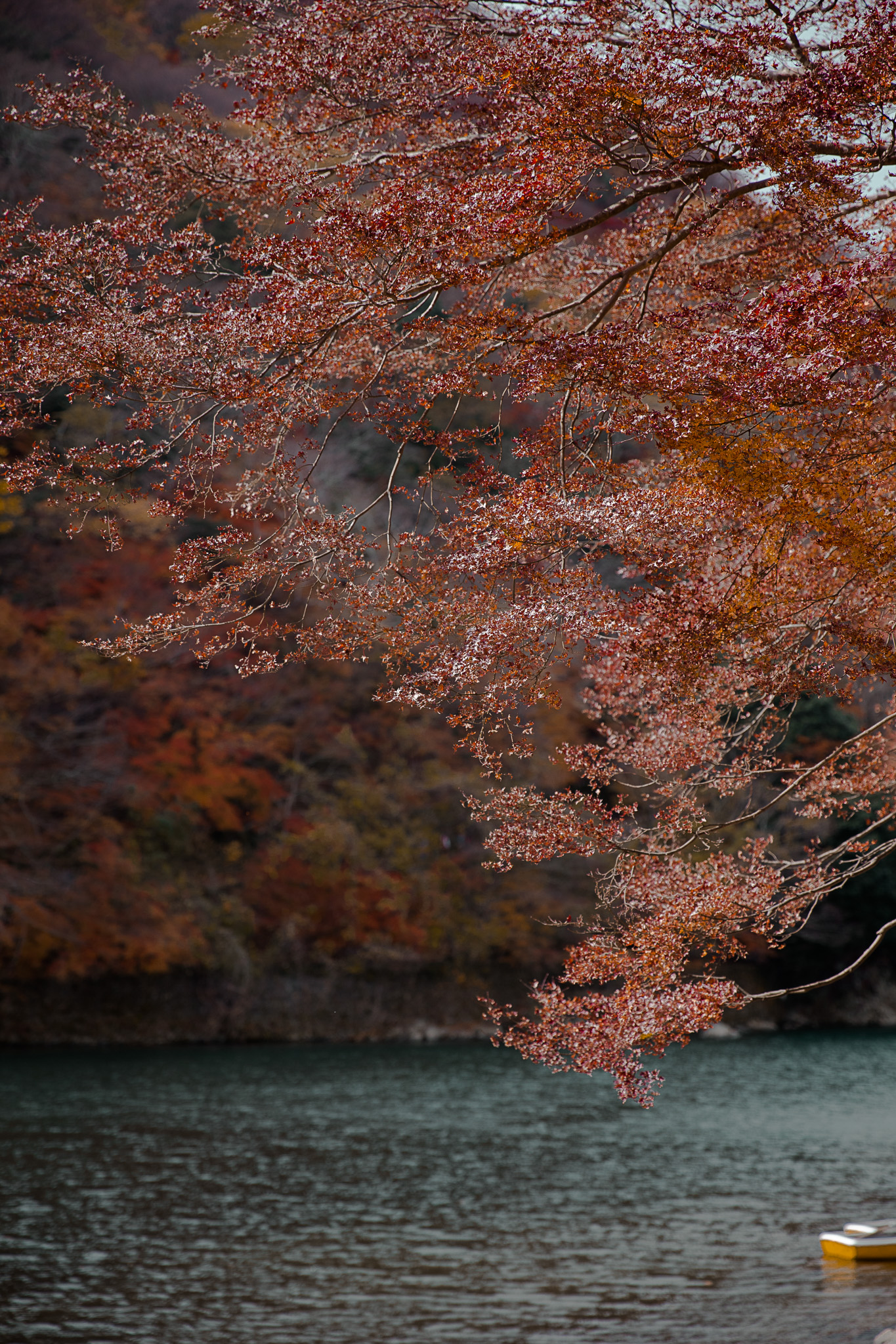 kyoto-sagano-autumn-colours