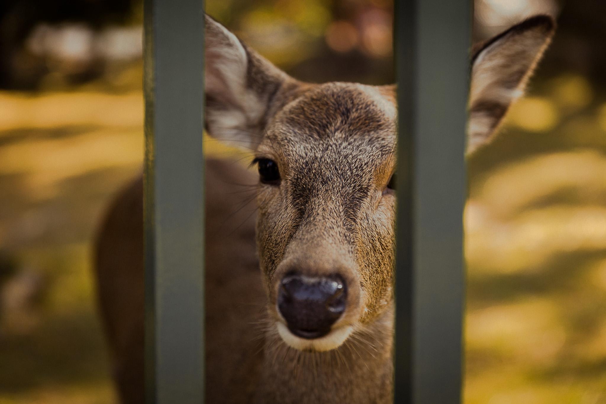 deer-nara-park-japan