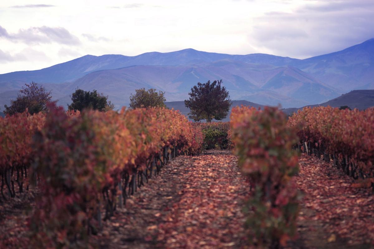 5 planes en La Rioja - Disfrutar del paisaje practicando senderismo o bicicleta