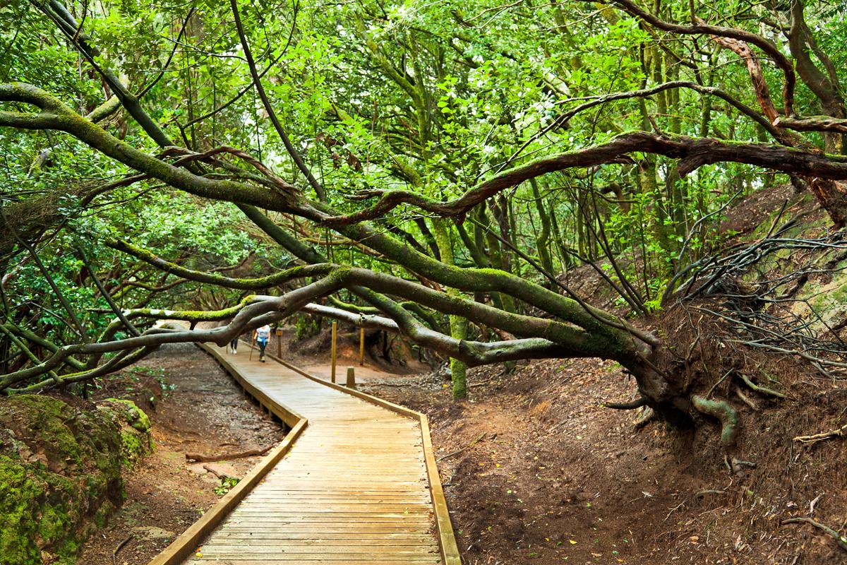 Qué ver en Tenerife - Parque Rural de Anaga