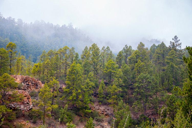 Qué ver en Tenerife - Parque Natural Corona Forestal
