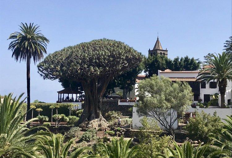 Qué ver en Tenerife - Drago Milenario