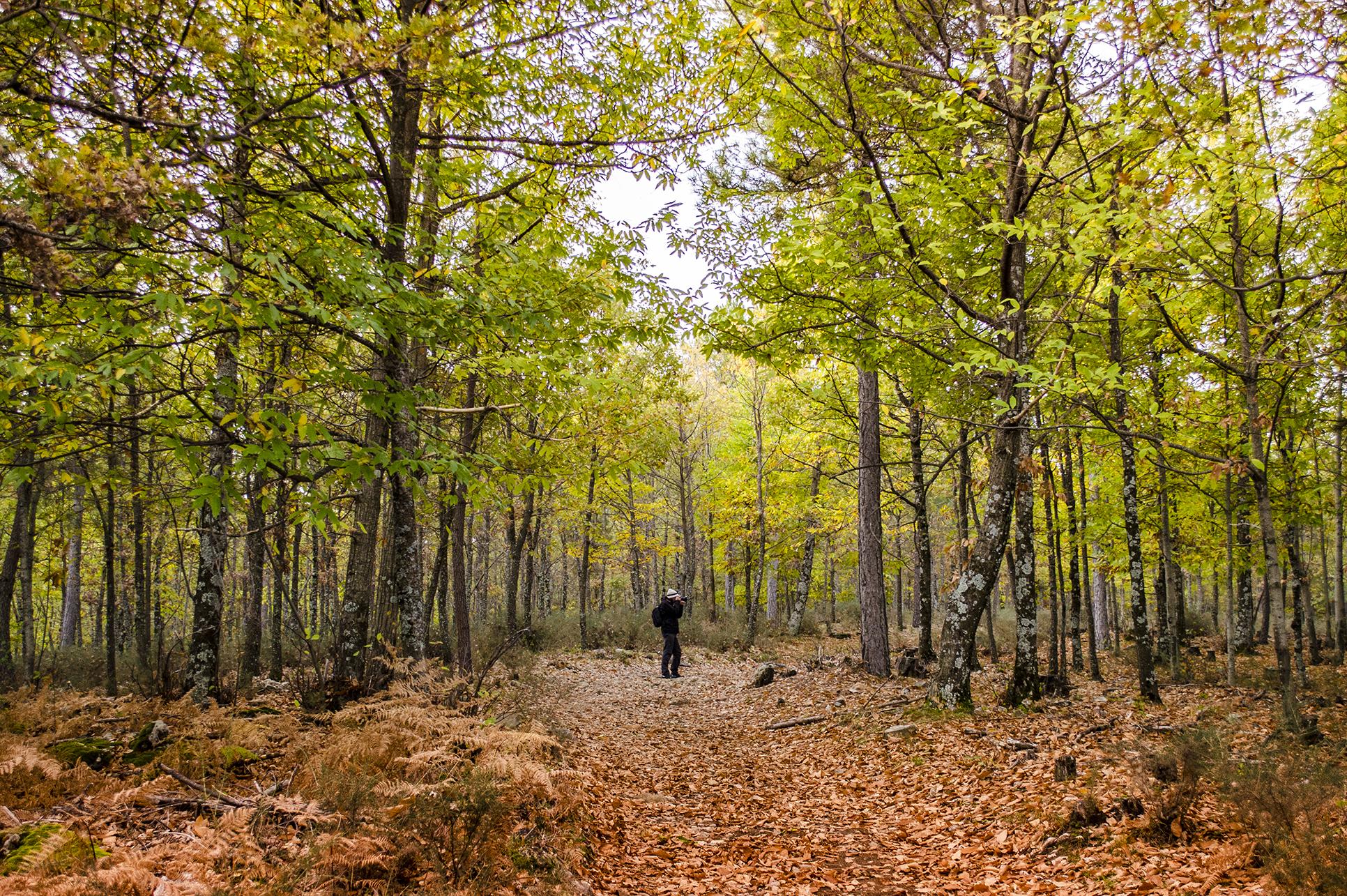 8 bosques en los que disfrutar del otoño - Castañar del Tiemblo | Foto:  Dolores Giraldez | Dreamstime.com