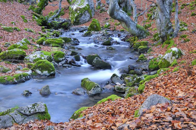 8 bosques en los que disfrutar del otoño en España - Faedo de Ciñera (León) | Foto:  Stockphotoastur | Dreamstime.com
