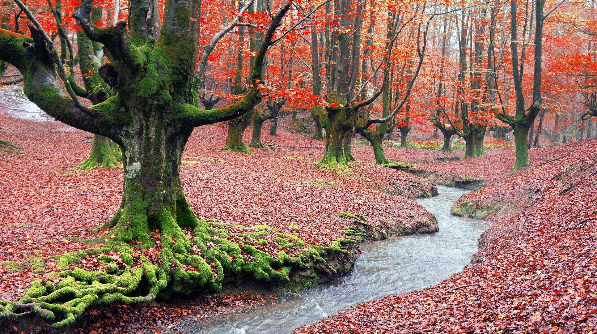 8 bosques en los que disfrutar del otoño en España - Hayedo de Otzarreta | Foto:  Mikel Martinez | Dreamstime.com