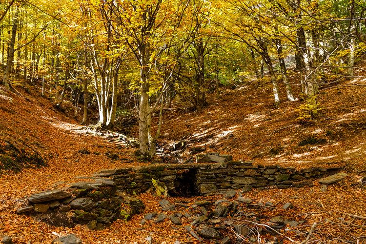 8 bosques en los que disfrutar del otoño - Hayedo de Tejera Negra
