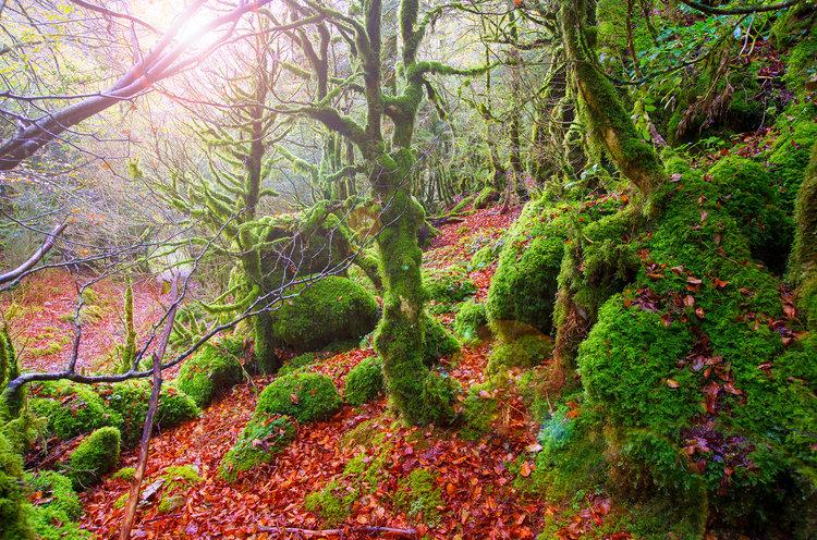 8 lugares en los que disfrutar del otoño en España - Selva de Irati | Foto:  Lunamarina | Dreamstime.com