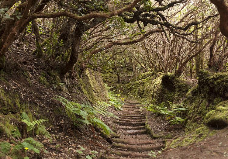 Qué ver en Tenerife: Parque Rural de Anaga