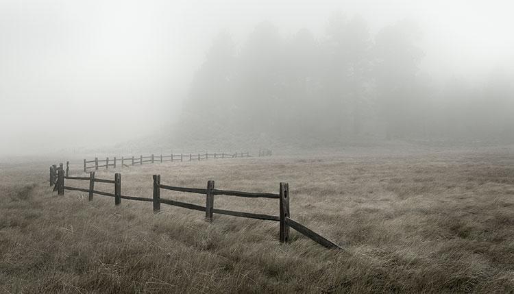treat-laguna-meadow-01.jpg