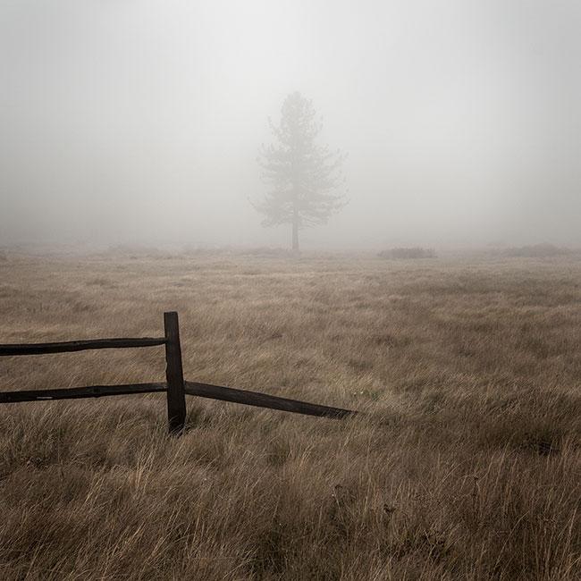 treat-laguna-meadow-05.jpg