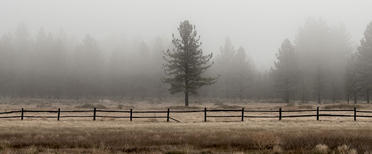 treat-laguna-meadow-07.jpg