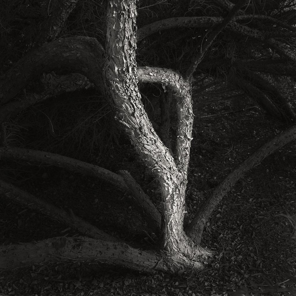 treat-one-eyed-woods-02.jpg