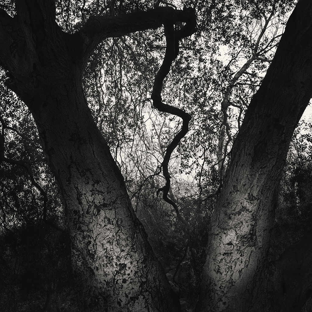 treat-one-eyed-woods-03.jpg