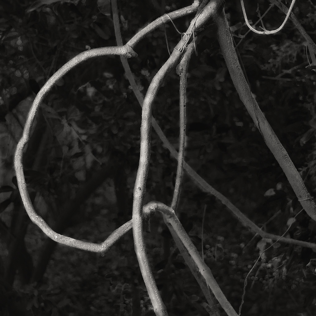 treat-one-eyed-woods-06.jpg