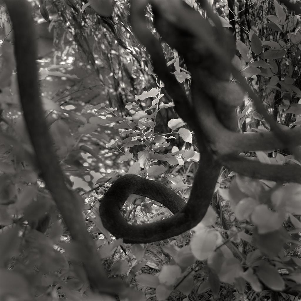 treat-one-eyed-woods-12.jpg