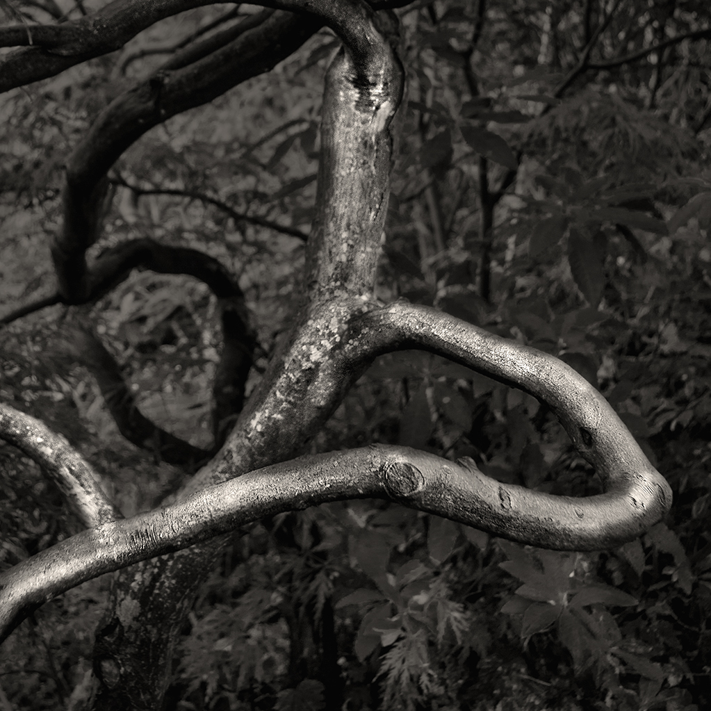 treat-one-eyed-woods-13.jpg