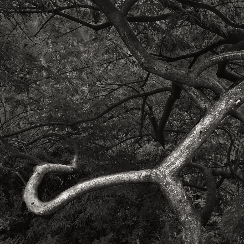 treat-one-eyed-woods-14.jpg