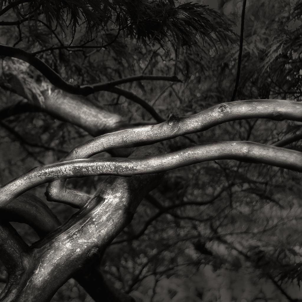 treat-one-eyed-woods-19.jpg