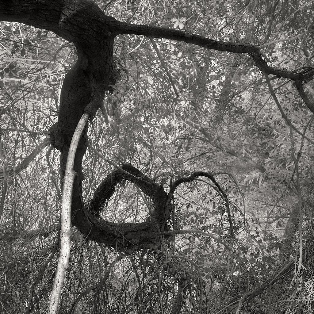 treat-one-eyed-woods-15.jpg
