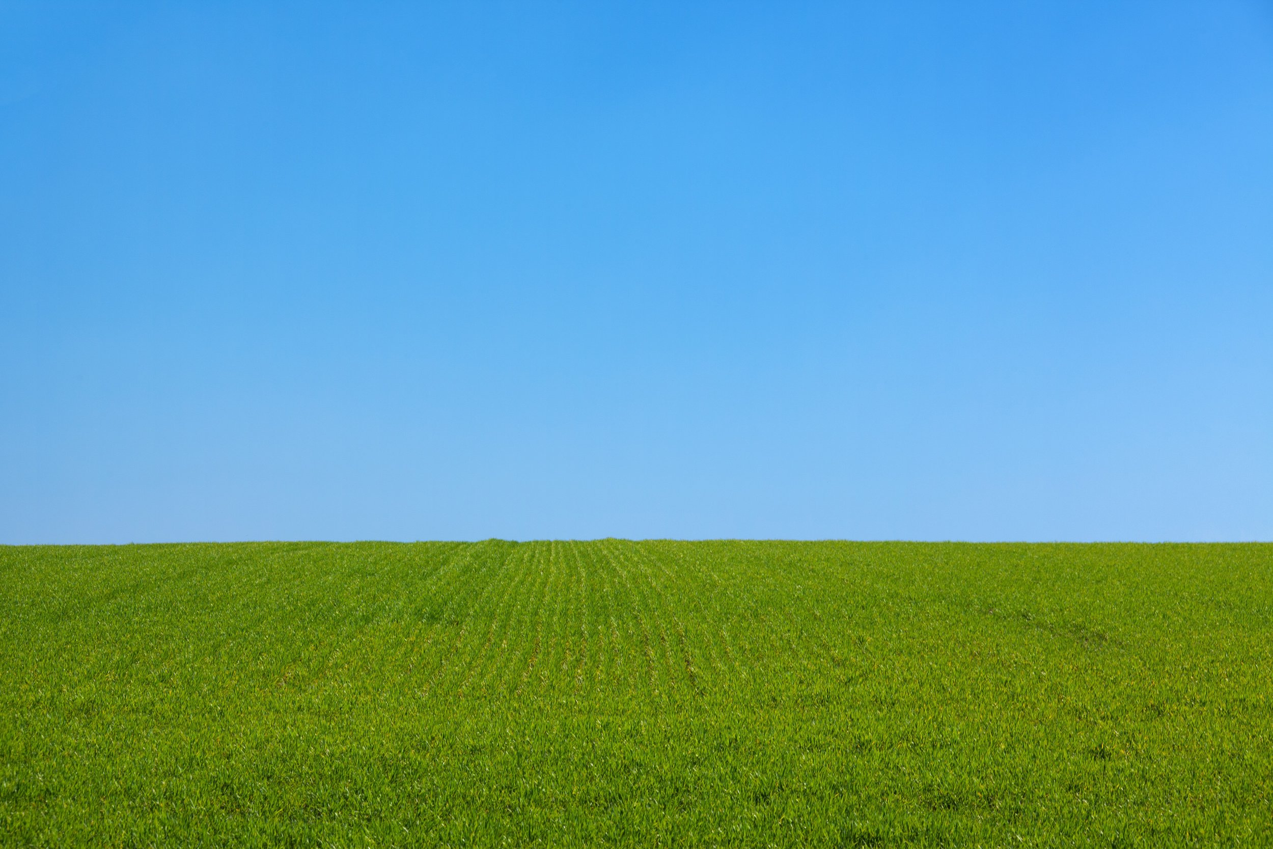 landscape-nature-grass-outdoor-horizon-plant-1153308-pxhere.com.jpg