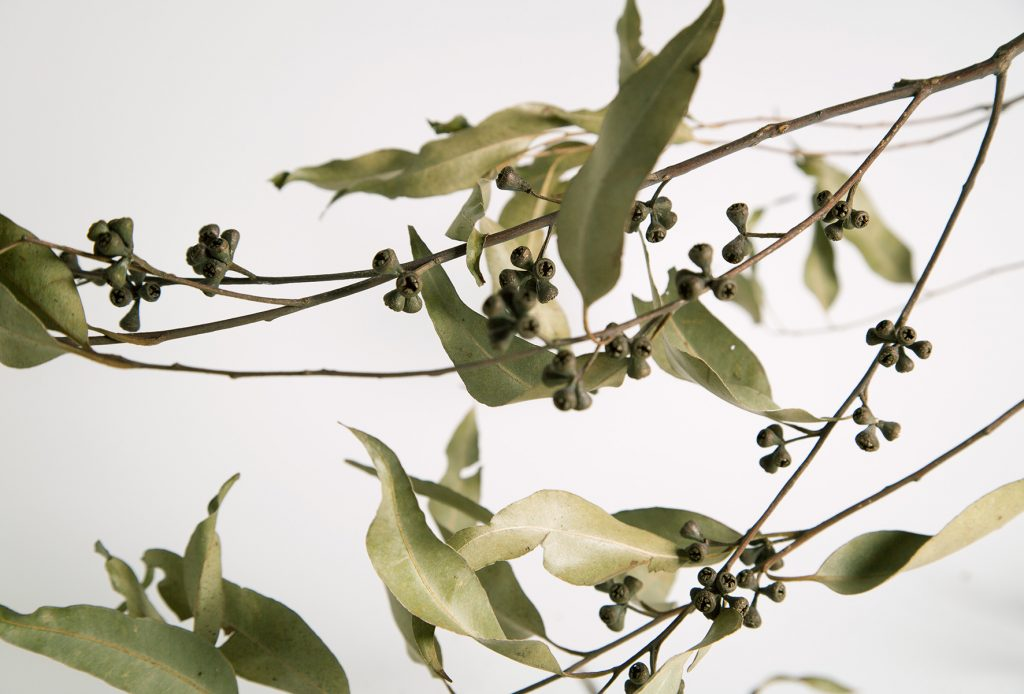 Natural-Take-2-1-1024x694.jpg