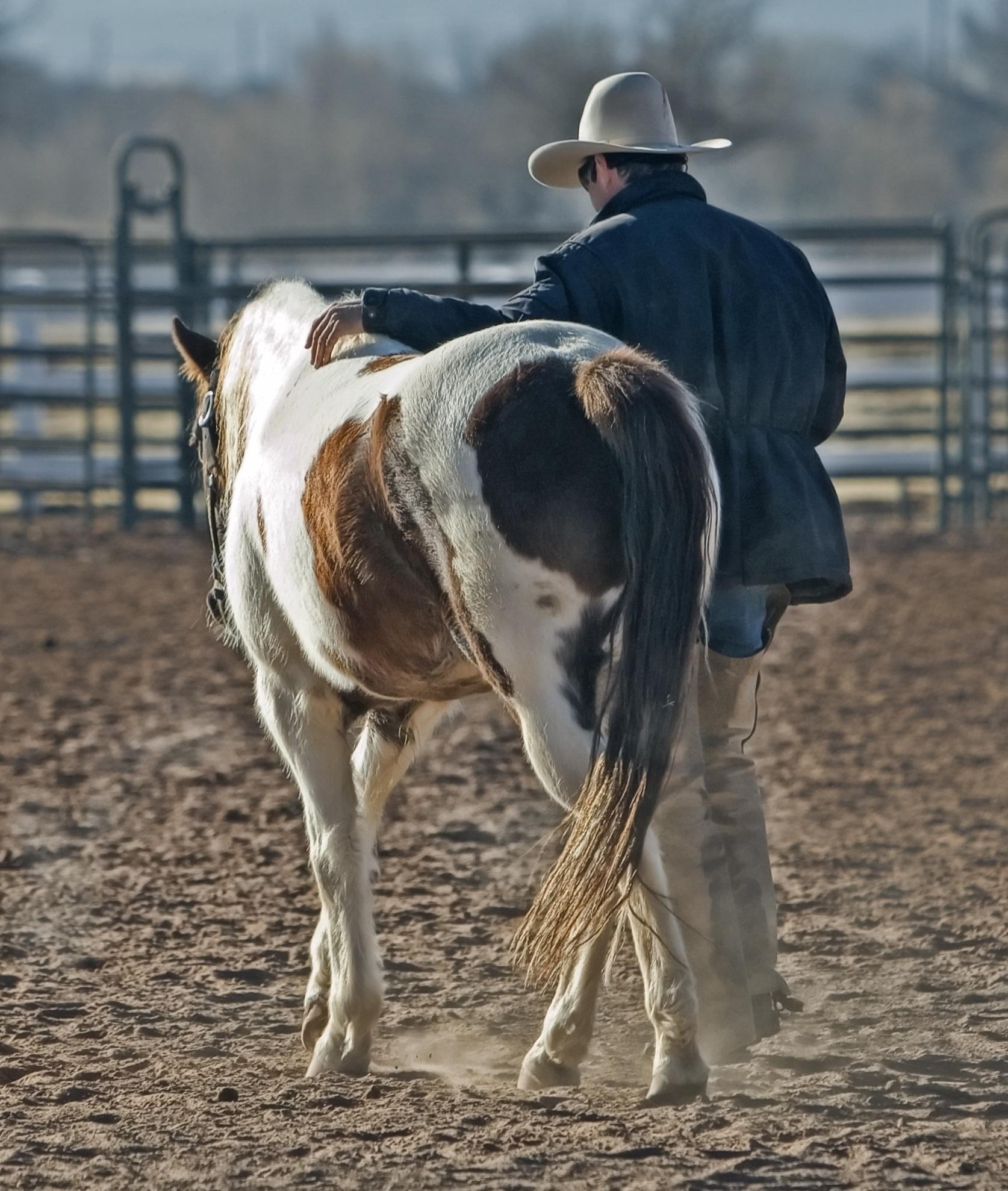 cowboy-horse-pony-western-53011.jpeg