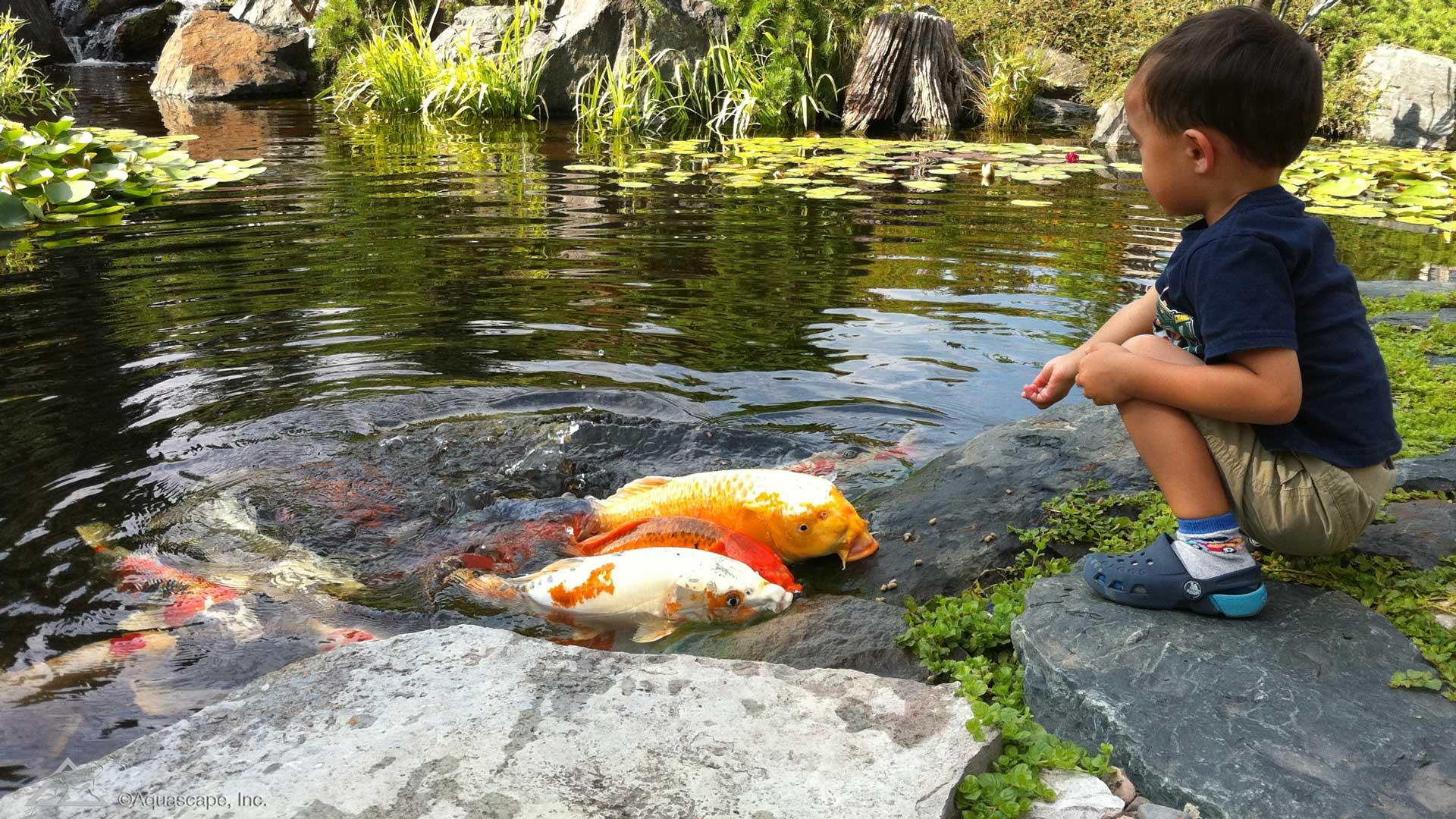 Auburn-Sky-Aquascape-Koi-Fish-Pond-Child.jpg