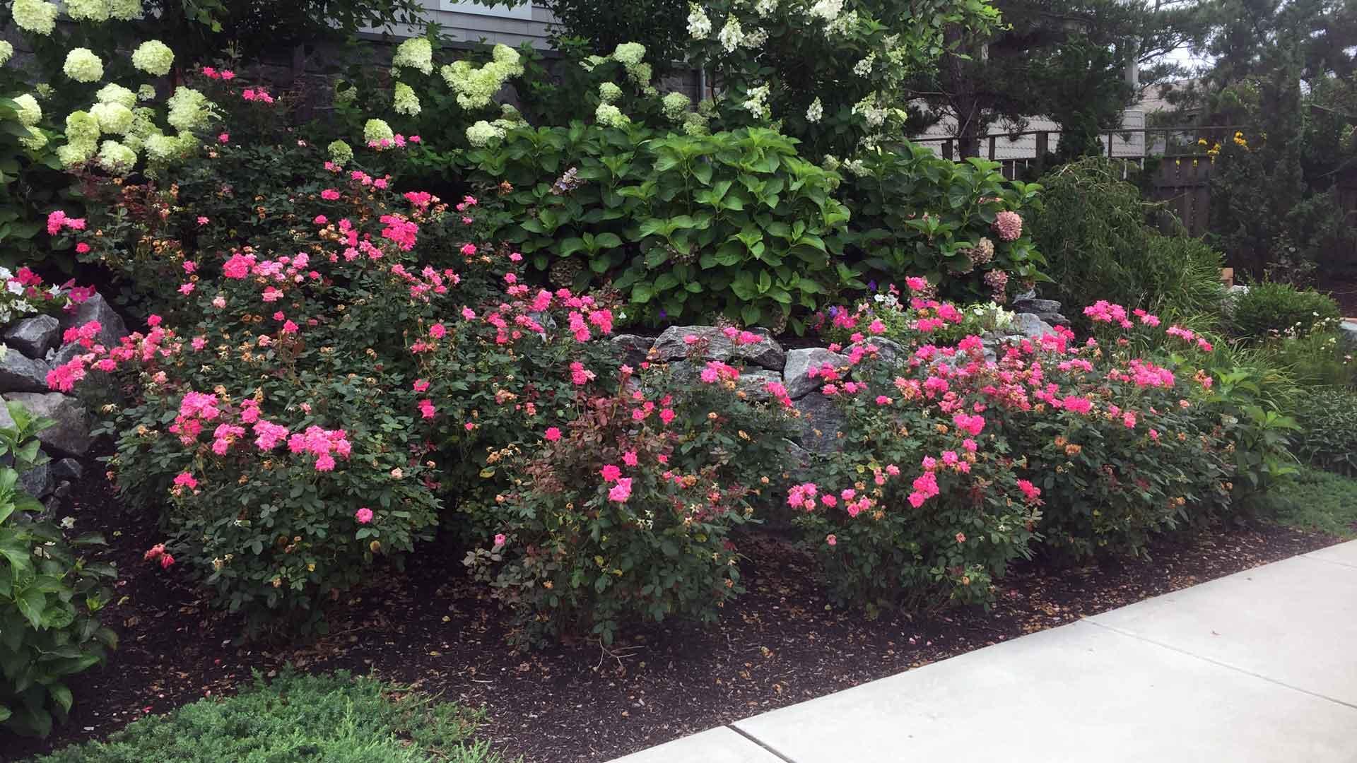 Auburn-Sky-Landscaping-Softscape-Plants-Curb-Appeal.jpg