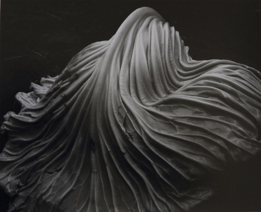 Cabbage-Leaf-1931-39V.jpg